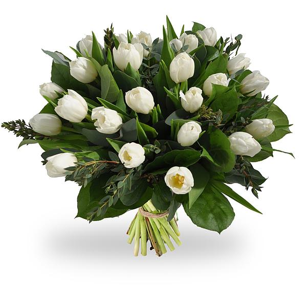 Witte tulpen medium