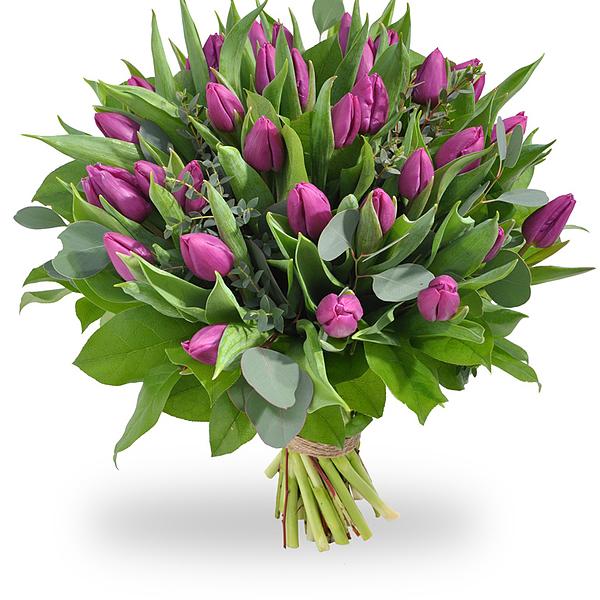 Boeket paarse tulpen XL