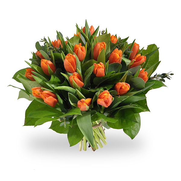 Oranje tulpen medium