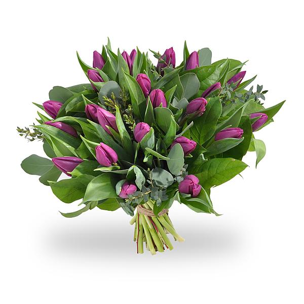 Paarse tulpen medium