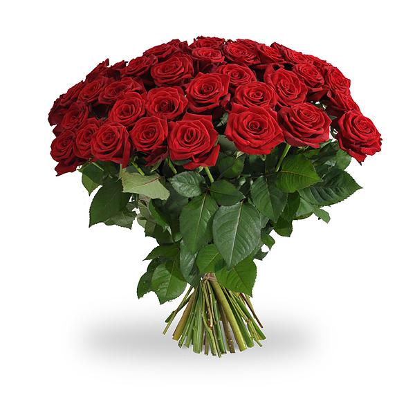 10 lange rode rozen