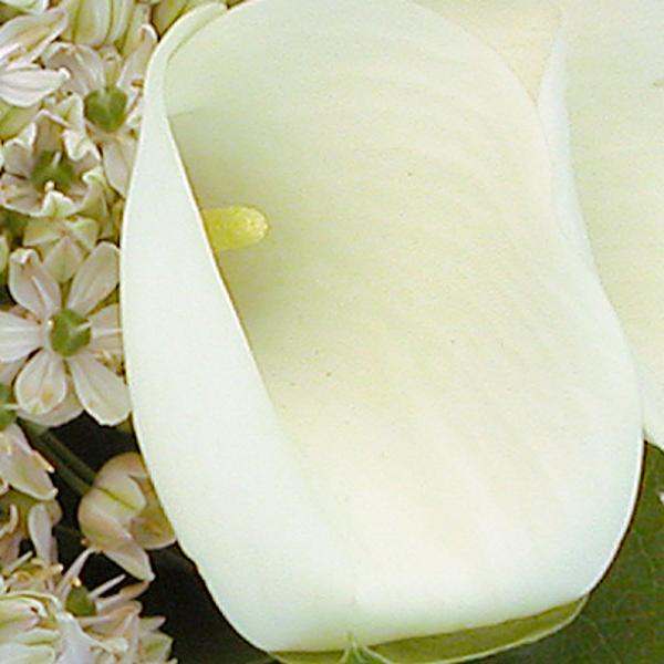 Rouwbloemen normaal