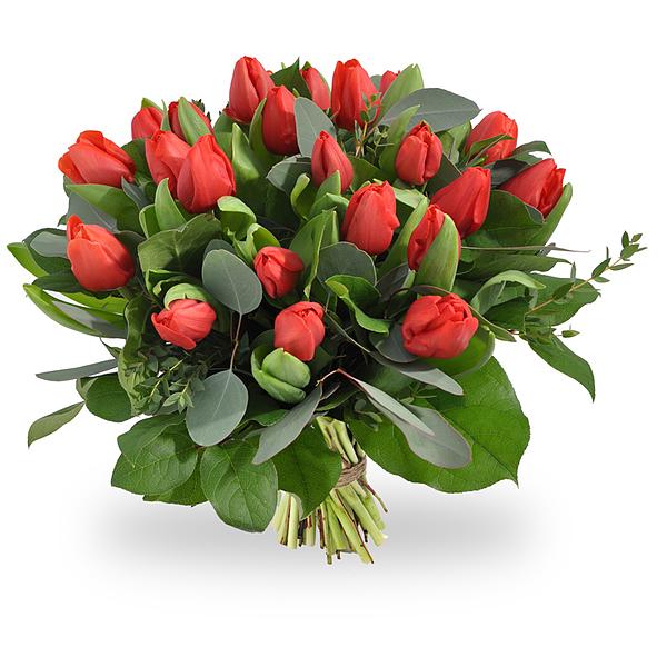 Red tulips medium