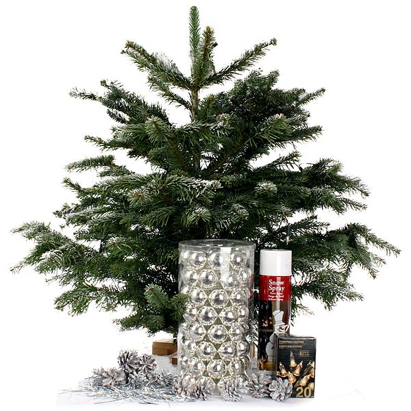 Nordmann Mini Kerstboom Zilver Bestellen En Bezorgen Topbloemen Nl